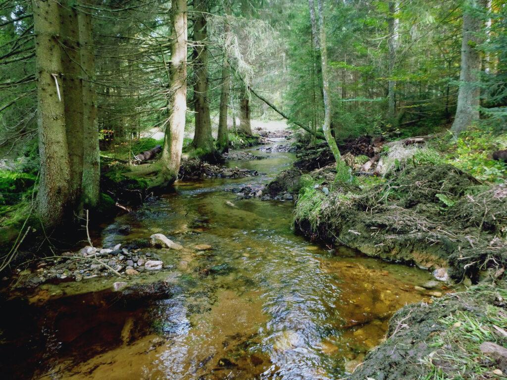 Kleine Ohe nach der Renaturierung (Fotos: NPV Bayerischer Wald)