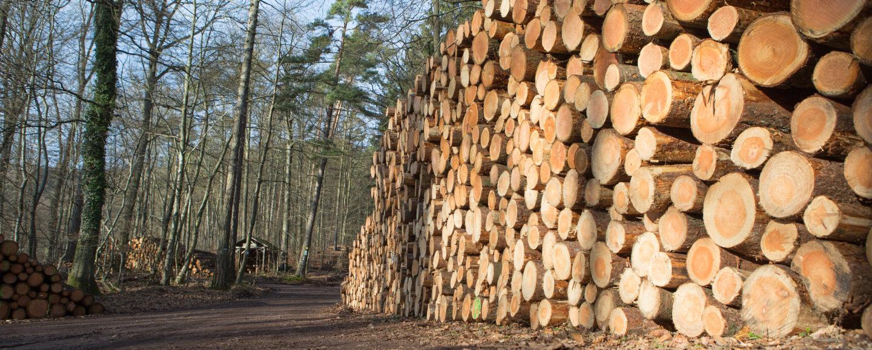 Industrieholz im Pflzer Wald