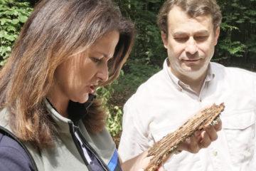 Um eine Massenausbreitung des Borkenkäfers zu verhindern, hat Forstministerin Michaela Kaniber die finanzielle Unterstützung für die Waldbesitzer verlängert. Das Bild zeigt die Ministerin mit Waldbesitzerverbands-Präsident Josef Ziegler.Foto: StMELF